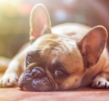 Qué NO debe comer tu perro