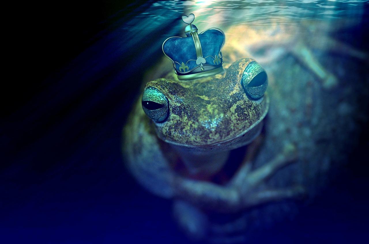 frog-2257133_1280