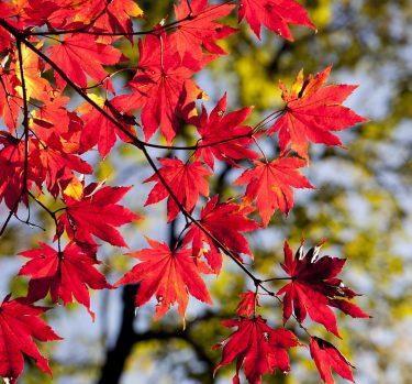 Alergias de otoño