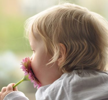 ¿Cuáles son los olores básicos?