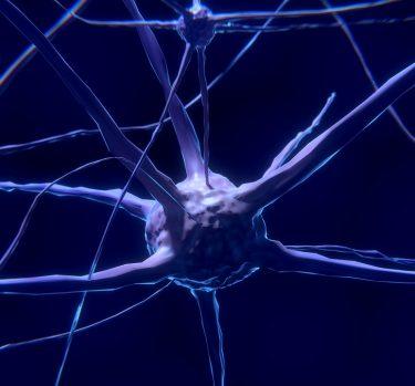 ¿Sabías que tus neuronas también necesitan trabajar?